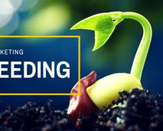 """Seeding là gì Bạn đã thực sự hiểu về cách """"gieo mầm"""" thần kỳ này - minara.net"""